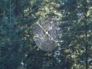 Spider Web between trees