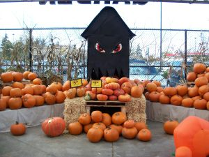 Fred Meyer Holiday Pumpkin Patch